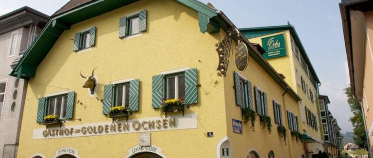 goldener-ochs1